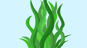 طرح توجیهی پرورش جلبک اسپیرولینا