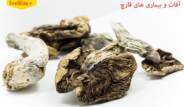 آفات و بیماری های پرورش قارچ